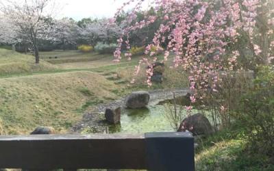 「待ちに待った春」の陽気です